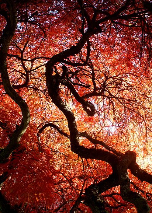 Botany Photograph - Closeness by Sonja Anderson