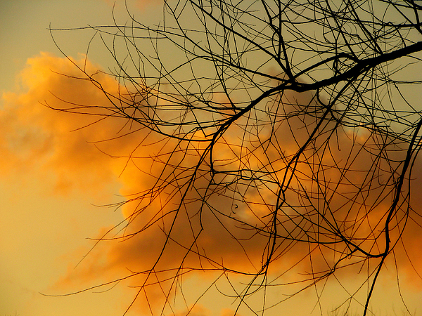 Clouds Photograph - Cloudy Silhouette by Dottie Dees