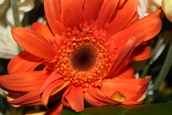 Flower Photograph - Clueless by Monica Smith