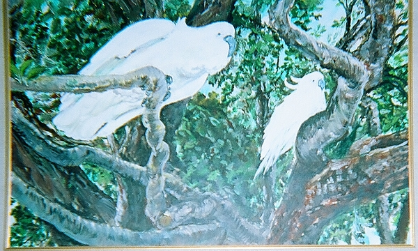 Birds Painting - Cockatoos In The Australian Jungle by Lulu Brymer