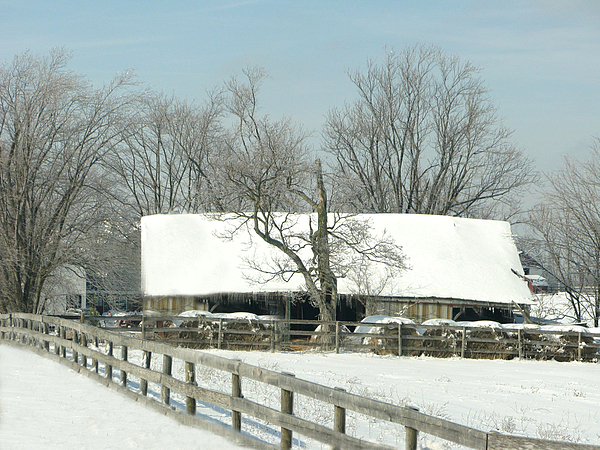 Barn Photograph - Cold Day by Martie DAndrea