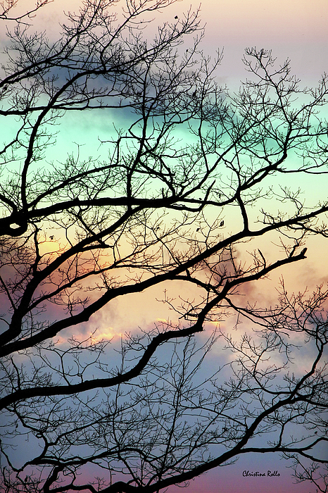Abstract Tree Mixed Media - Cold Hearted Bliss by Christina Rollo