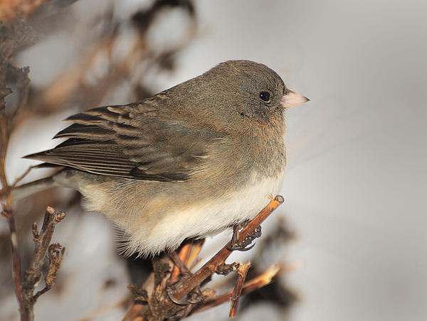 Bird Photograph - Cold Wind Today by Richard Oliver