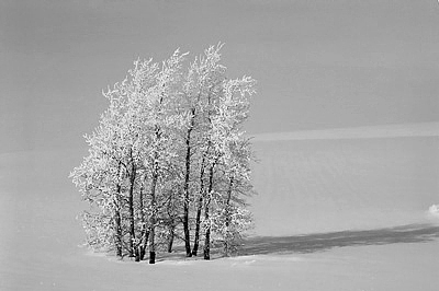 Winter Photograph - Cold Winter Trees by Gene Mace