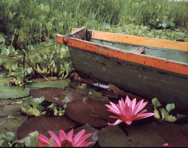 Boat Photograph - Colombian Boat And Flowers by Lawrence Costales
