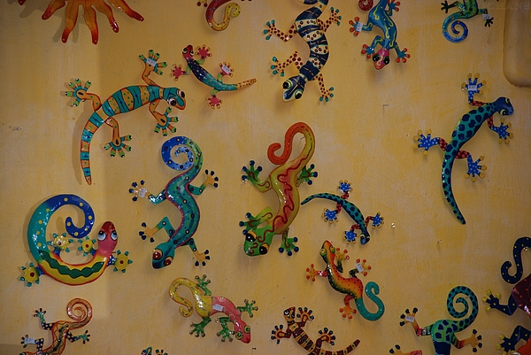 Southwestern Photograph - Color Lizards On The Wall by Rob Hans