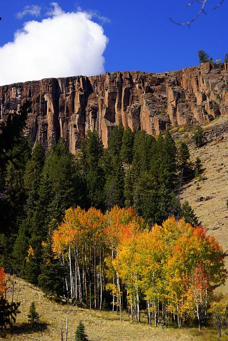 Colorado Photograph - Colorado Fall 4 by Marty Koch