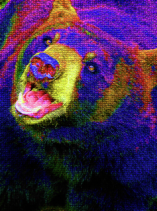 Bear Photograph - Colorful Bear by Karol Livote