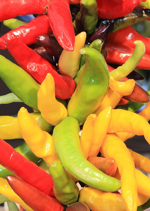 Peppers Photograph - Colorful Chili Peppers  by Carol Groenen
