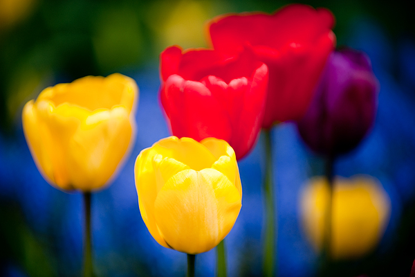 Flower Photograph - Colorful L569 by Yoshiki Nakamura