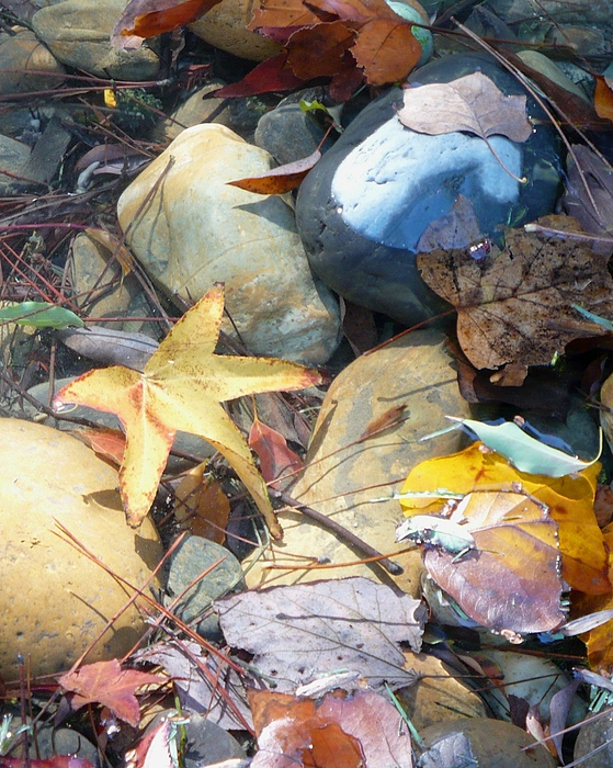 Leaves Photograph - Colorful Leaves And Rocks In Creek by Carol Groenen