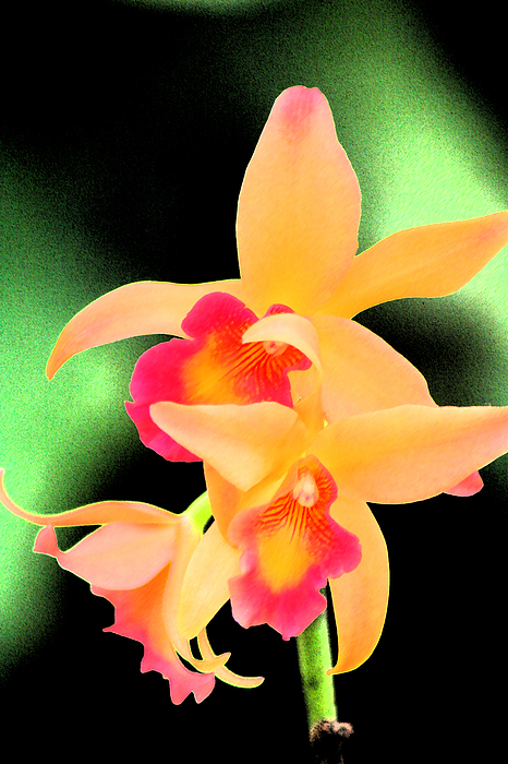 Orchid Photograph - Colorful Orchid by Nanette Hert