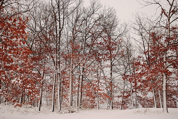 Winter Photograph - Colorful Winters Day by Frozen in Time Fine Art Photography