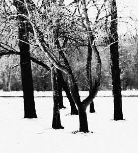 Colors Of Winter  Entangled Photograph by Eduardo Hugo