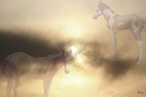 Quarter Horse Photograph - Colts Dreams by Andrea Lawrence