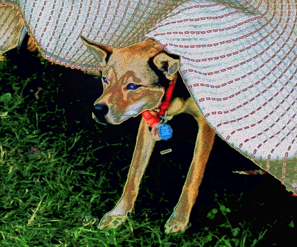 Dog Digital Art - Come Play In My Tent by Cliff Wilson & Come Play In My Tent Digital Art by Cliff Wilson