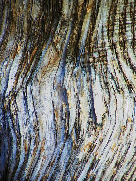 Tree Bark Photograph - Contrast I by Kim Zwick