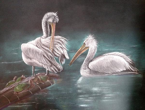 Pelicans Pastel - Conversation by Joan Mansson