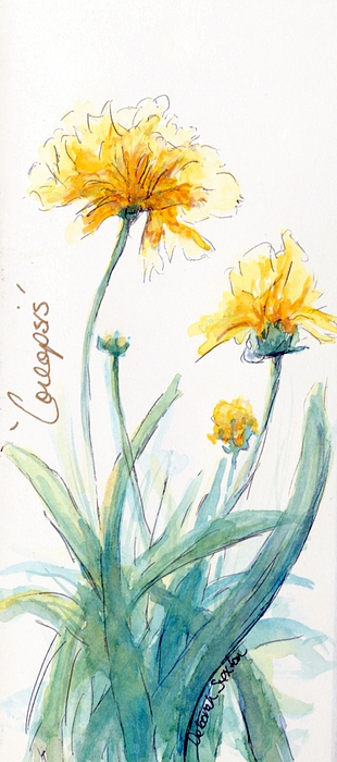 Yellow Painting - Coreopsis by CheyAnne Sexton