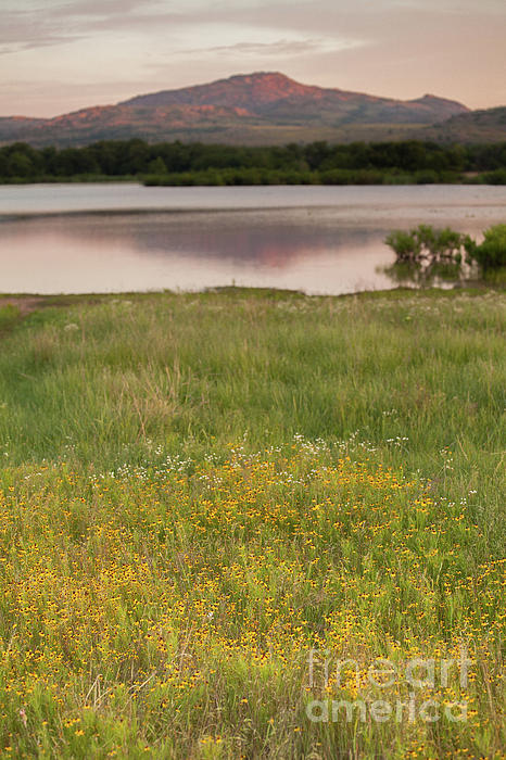 Lake Photograph - Corepsis Blooming At The Quanah Parker Lake by Iris Greenwell