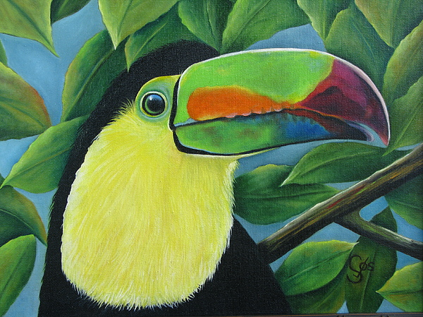 Toucan Painting - Costa Rican Toucan by Shirley C Checkos