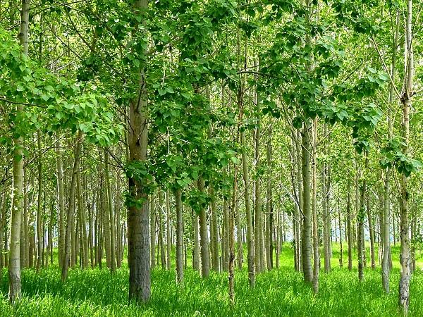Will Borden - Cottonwood Grove