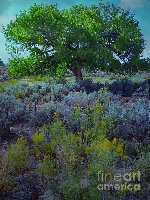 Cottonwood Tree In Old Field Digital Art by Annie Gibbons