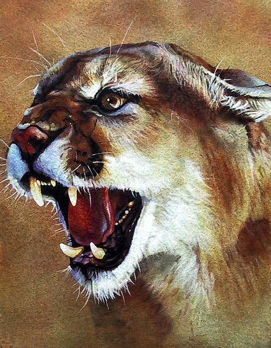 Southwest Art Painting - Cougar by J W Baker