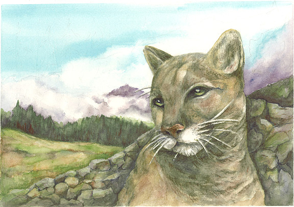 Cougar Painting - Cougar by KC Winters