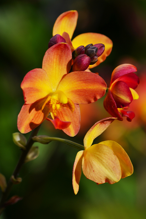 Flower Photograph - Count Your Blessings by Melanie Moraga