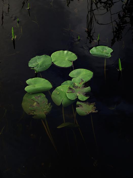 Lily Pads Photograph - Country Creek by Stan Wojtaszek