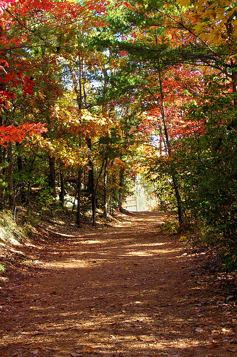 Fall Photograph - Country Path by Ralph  Perdomo