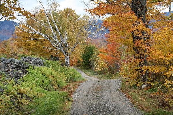 Fall Photograph - Country Road by Lori Brandon