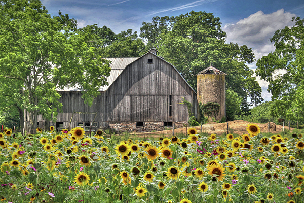 Flower Photograph - Country Sunflowers by Lori Deiter