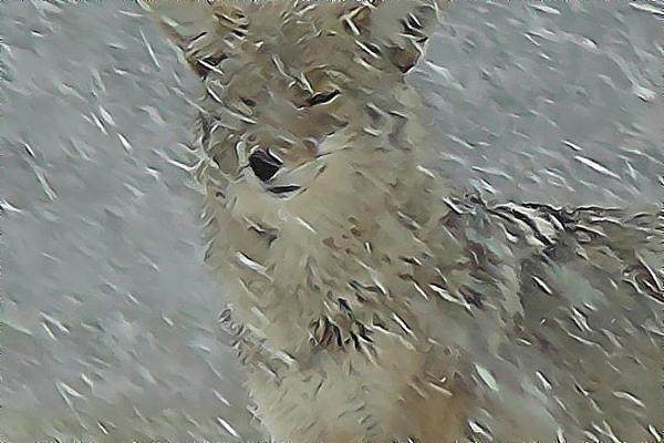 Wildlife Pastel - Coyote In Winter by Errol Savage