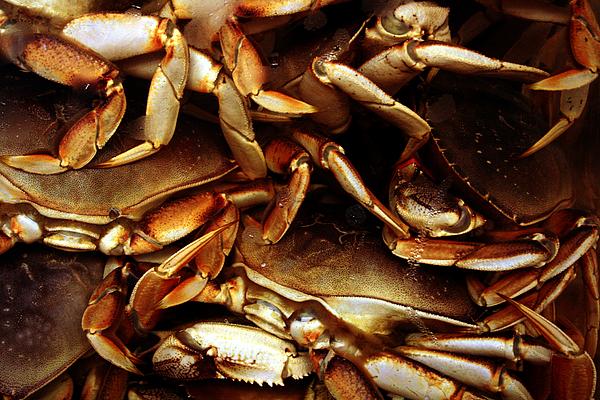 Ocean Photograph - Crabs Awaiting Their Fate by Jennifer Bright