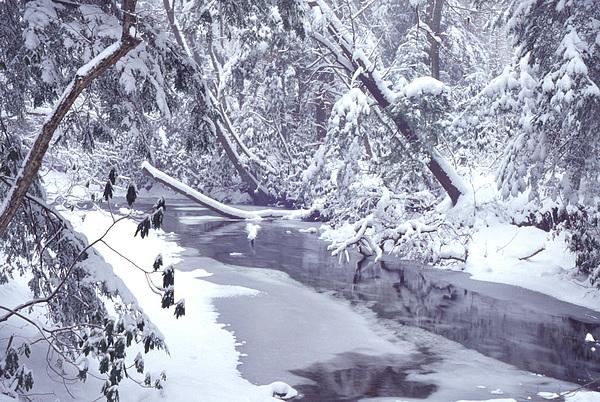 Usa Photograph - Cranberry River Winter Heavy Snow by Thomas R Fletcher