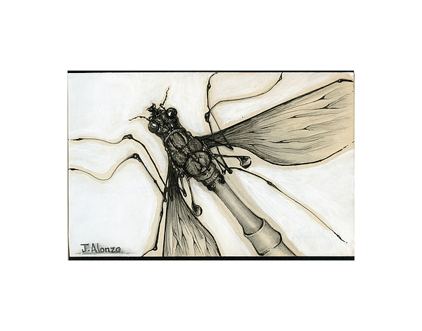 Crane Fly Drawing by Jesse Alonzo
