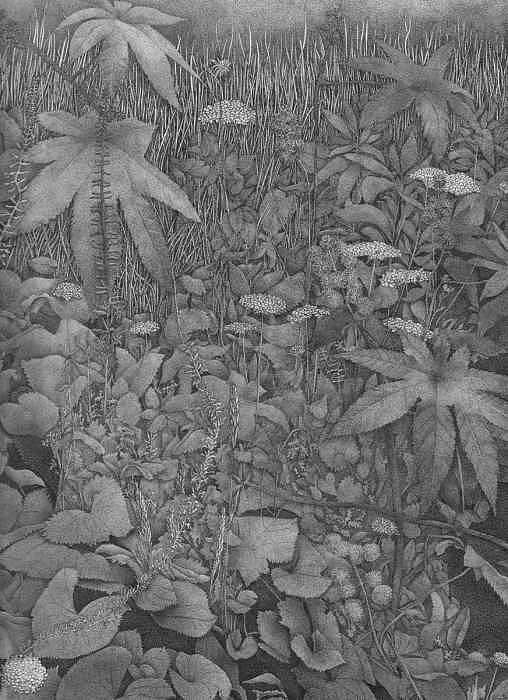 Crazy Leaves Drawing by Donna Gierman