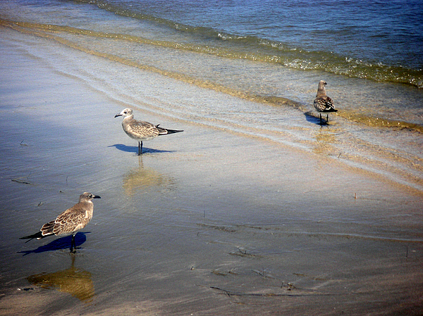 Nature Photograph - Creatures Of The Gulf - Which Way by Lucyna A M Green