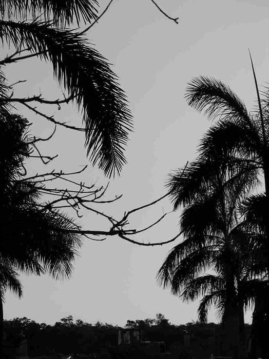 Palm Photograph - Creepy Palm by Alexis Lape