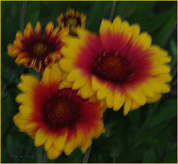 Flowers Photograph - Crimson And Gold by Gerry Tetz