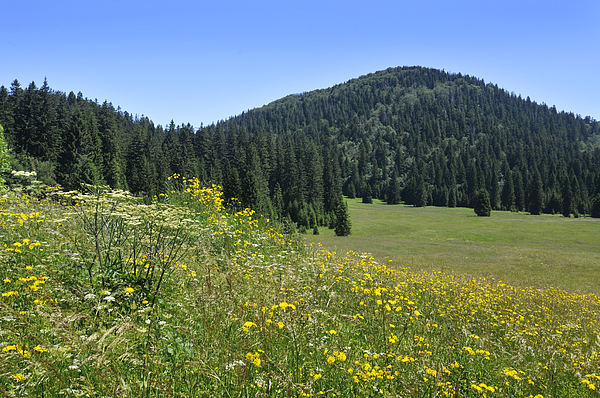 Flowers Photograph - Croatian Meadow by Don Wolf