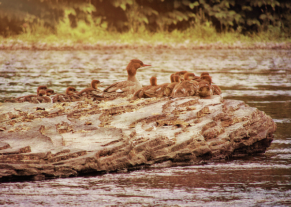 Bird Photograph - Crossing The River by JAMART Photography