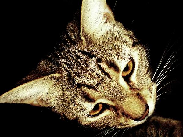 Cats Photograph - Curiosity by Chrisselle Mowatt