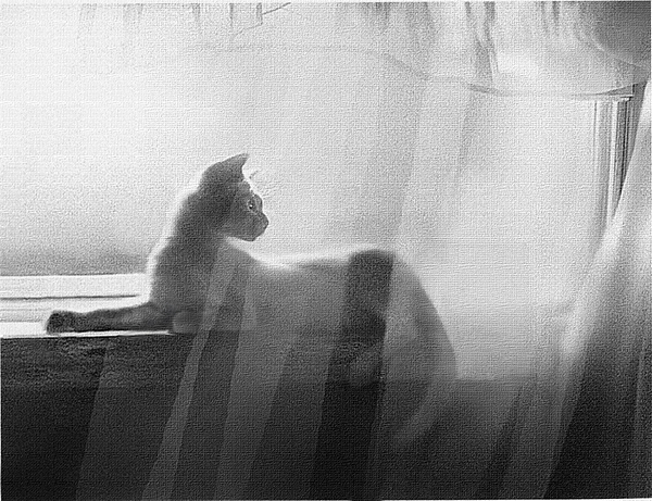 Cat Painting - Curtain Light by Robert Foster