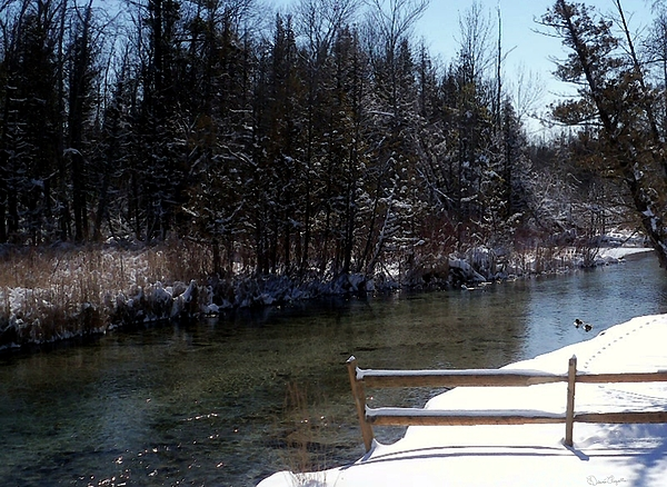Roscommon County Photograph - Cut River In Winter With Ducks by Desiree Paquette