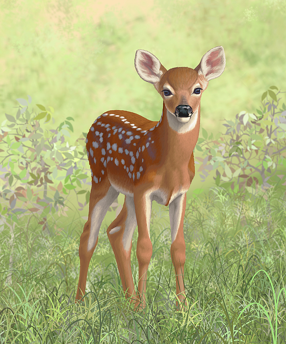 Deer Painting - Cute Whitetail Deer Fawn by Crista Forest