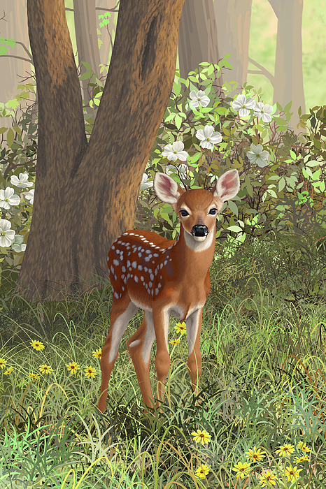 Whitetail Painting - Cute Whitetail Fawn by Crista Forest