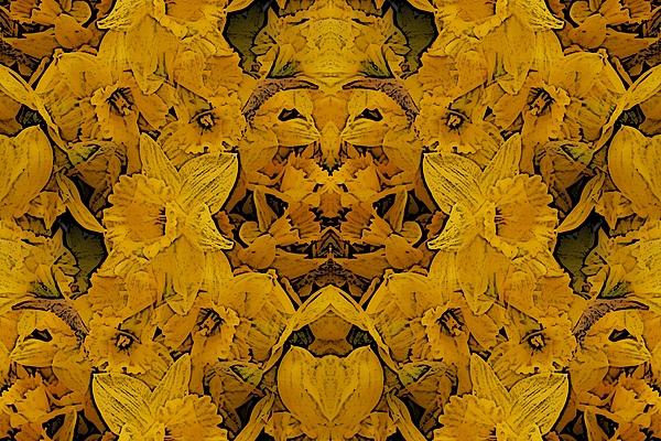 Daffodil Digital Art - Daffy Daffodils by Tim Allen